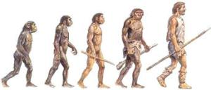 hominidos2